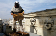 Urban beekeeping operahuis Parijs